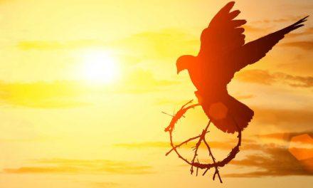 La paz empieza por la tolerancia