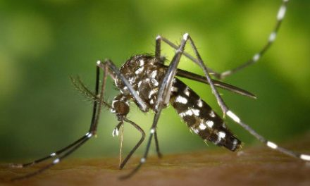 Mosquitoes: annoying and deadly