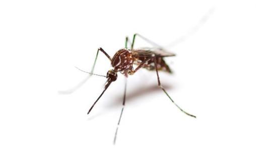 Peligros de las picaduras de mosquitos