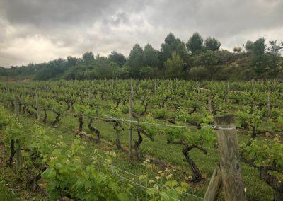 Encuentro-Rioja Alavesa-RAED-RAMPV-Laguardia-Pais-Vasco-2019-05-3