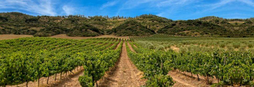 Ciencia y cultura en La Rioja Alavesa