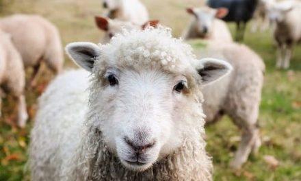 La Covid-19, la seguridad alimentaria, los animales de granja y los domésticos