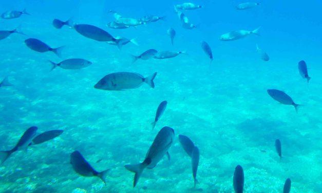 El confinamiento y la salud del mar