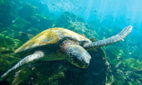 Las Galápagos, el mejor laboratorio para estudiar y combatir la crisis climática