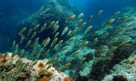 Protegiendo el ámbito marino desde la ciencia