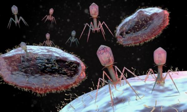 Los bacteriófagos: una nueva y efectiva alternativa a los antibióticos